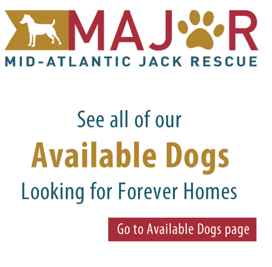 Mid Atlantic Jack Rescue