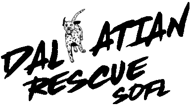 Dalmatian Rescue Of South Florida