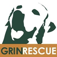 Grin - Golden Retrievers In Need Rescue Service, Inc.