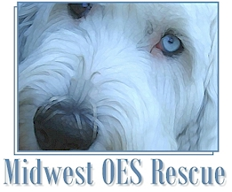 Midwest Old English Sheepdog Rescue