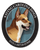 Saving Carolina Dogs Rescue And Adoption Network - Ri Chapter
