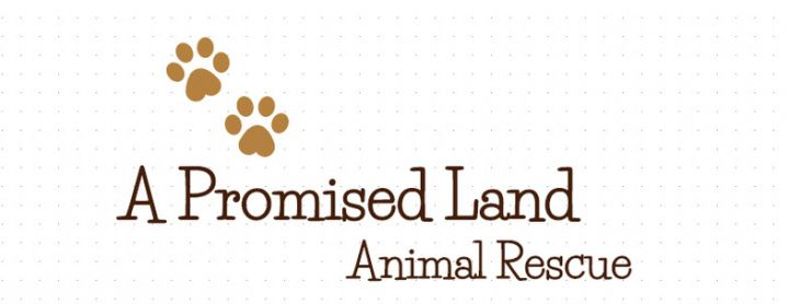 A Promised Land Animal Rescue