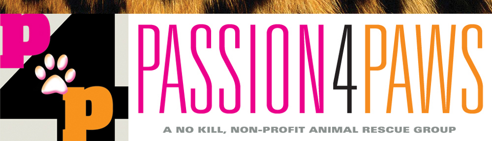 Passion 4 Paws