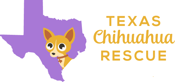 Texas Chihuahua Rescue - Pittsburgh, Pa