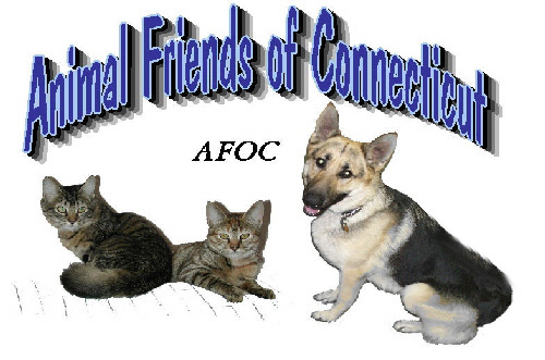 Animal Friends Of Connecticut