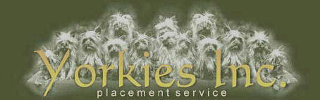 Yorkies Inc. Placement Service