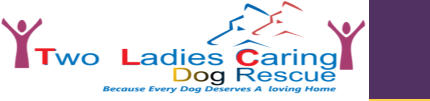Two Ladies Caring Dog Rescue